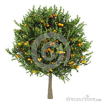 Oranje boom die op wit wordt geïsoleerdl