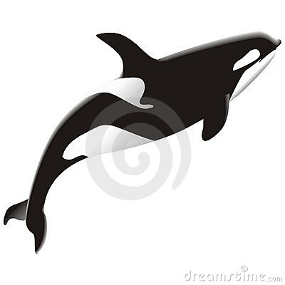 Free Orca Royalty Free Stock Photos - 2536368