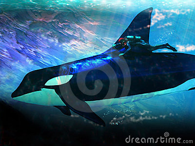 Orca and diver