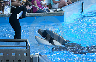 Orca Whale Editorial Image