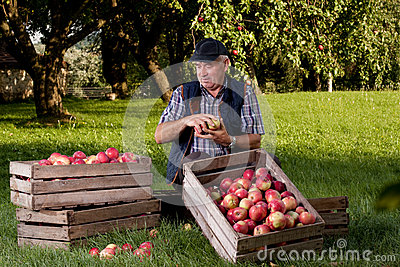 Orchard Stock Photo Image 50570811