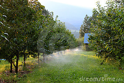 Orchard irrigation