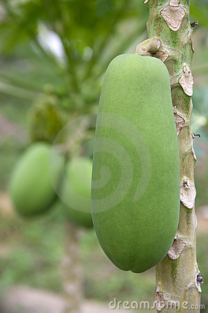 Orchard Papayas