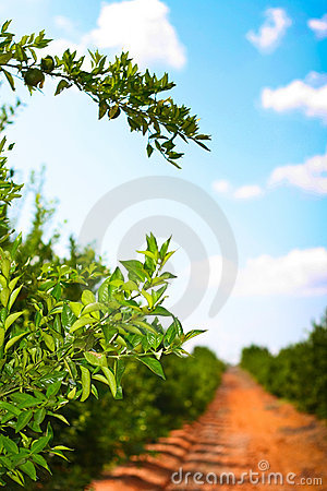 Free Orchard Path Royalty Free Stock Photos - 12284948