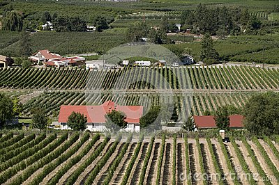 Orchards and vineyards