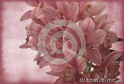Orchid τρύγος