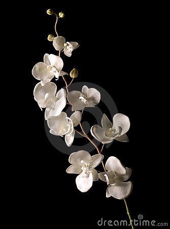Free Orchid Stock Image - 16063811