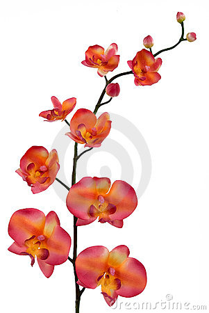 Free Orchid Royalty Free Stock Photos - 1783208