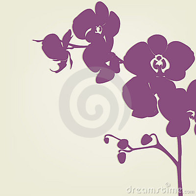 Free Orchid Royalty Free Stock Images - 18672349