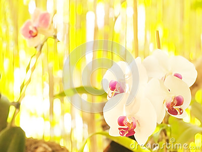 Orchid on abstract blurred background