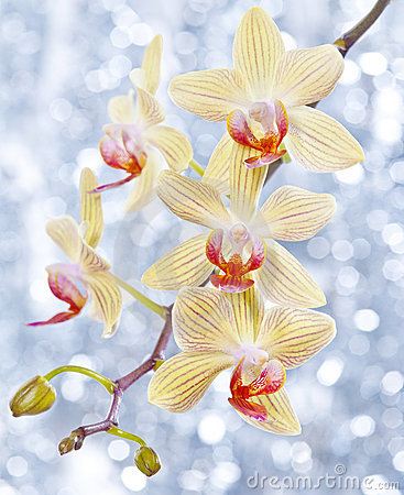 Free Orchid And Blue Bokeh Royalty Free Stock Photo - 22916095