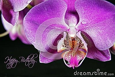 Orchid Birthday