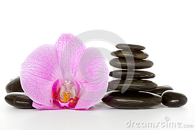 Orchid and black stones