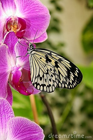 Orchid and butterfly.