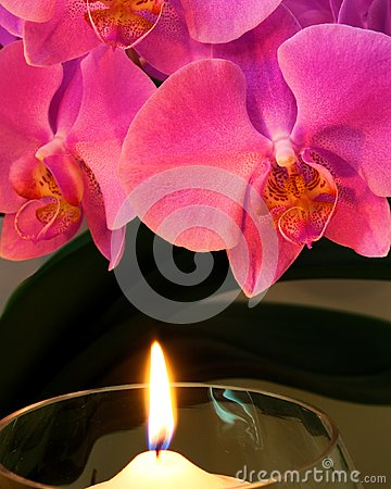 Orchid by Candle Light
