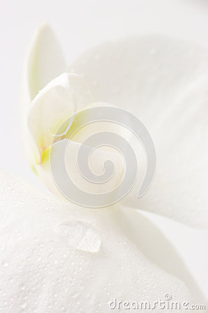 Free Orchid Close-up Royalty Free Stock Photo - 25323275
