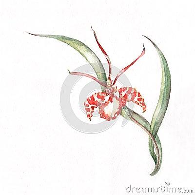 Orchid corner pattern