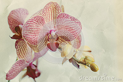 Orchid flovers.