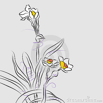 Orchid Flower Arrangement Line Drawing