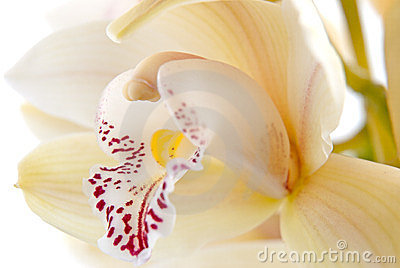 Orchid flower close-up, selective