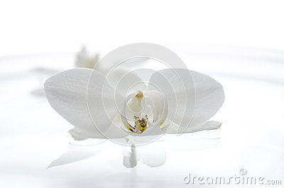 Orchid flower floating on the water