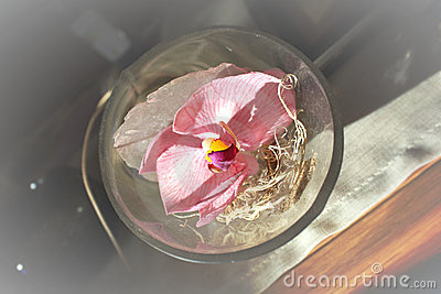 Orchid flower in glass bowl