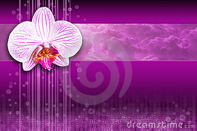 Orchid flower - purple digital computing design