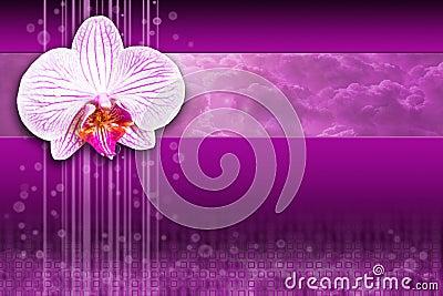 Orchid flower - purple digital computing design