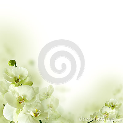 Free Orchid Flowers And Greenery, Floral Background Stock Photos - 28849103