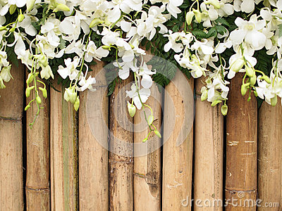 Orchid flowers on bamboo