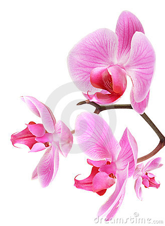 Orchid flowers on branch
