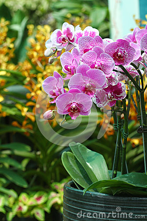 Orchid flowers display - series 2