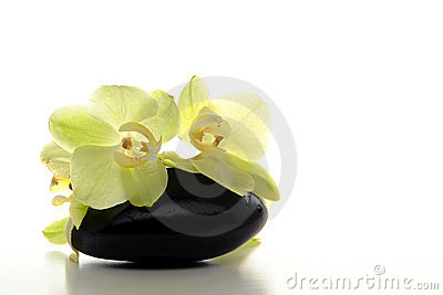 Orchid Flowers on Polished Hot Massage Stone