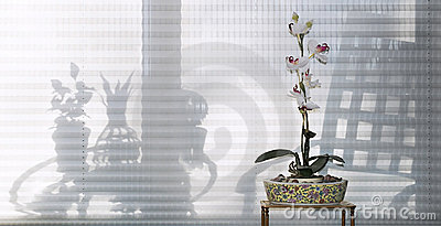 Orchid with Furniture Silhouettes