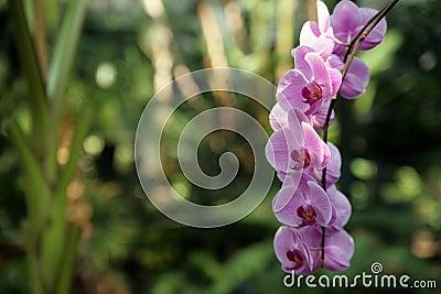 Orchid in garden