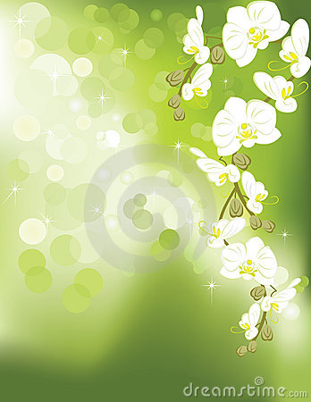 Orchid on green light background