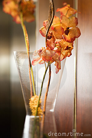 Free Orchid In Vase. Royalty Free Stock Photo - 2850255