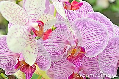 Orchid petal flowers