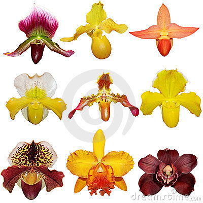 Free Orchid Set Stock Image - 18382541