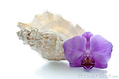 Orchid and shell