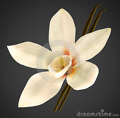 Orchid and vanilla beans with clipping path