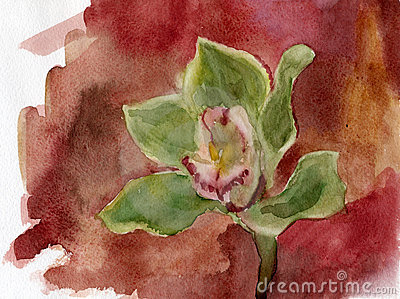 Orchid. Watercolor.
