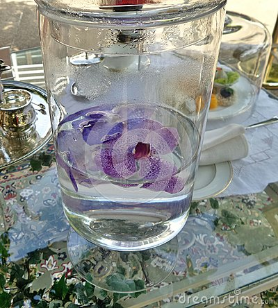 Orchidea porpora che galleggia in chiara acqua fotografia for Orchidea acqua