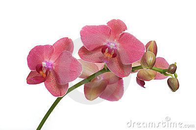 Orchidee Stock Images - Image: 9287784
