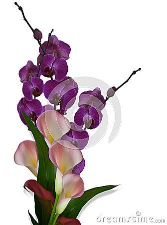orchideen und calla lilien stockbilder bild 8355864. Black Bedroom Furniture Sets. Home Design Ideas