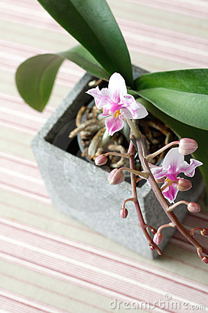 Free Orchids Royalty Free Stock Photography - 14202857