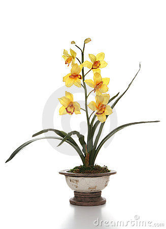 Free Orchids Stock Images - 3166104