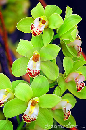 Free Orchids Stock Images - 6045124