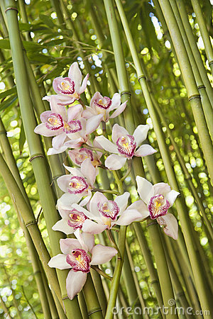 Free Orchids And Bamboo Stalks Royalty Free Stock Image - 12933196