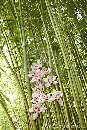 Free Orchids And Bamboo Stalks Stock Photo - 12933210